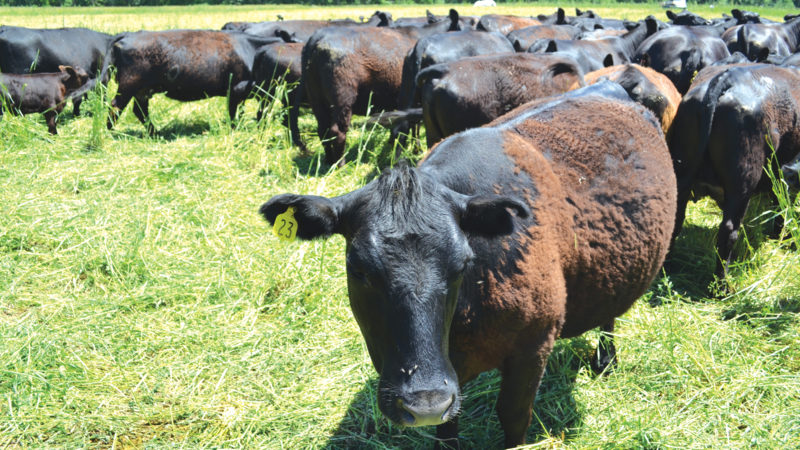 Perennial Forage & Grazing